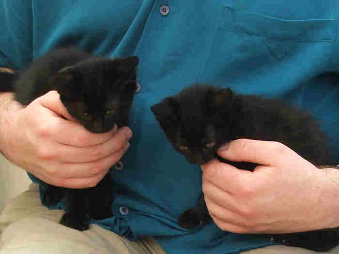 Kittens_20060604_13