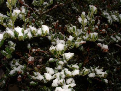 Snow_20040128_06_web