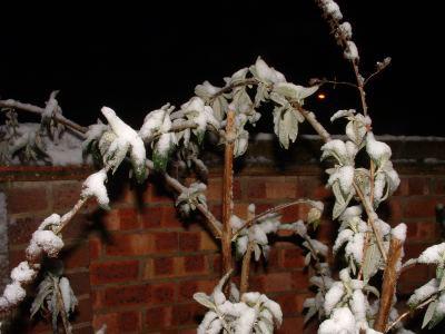 Snow_20040128_08_web