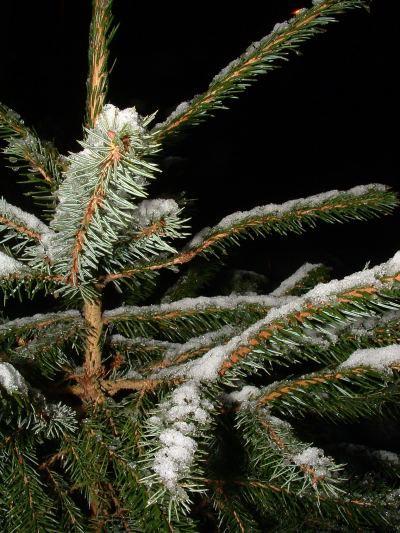 Snow_20040128_20_web