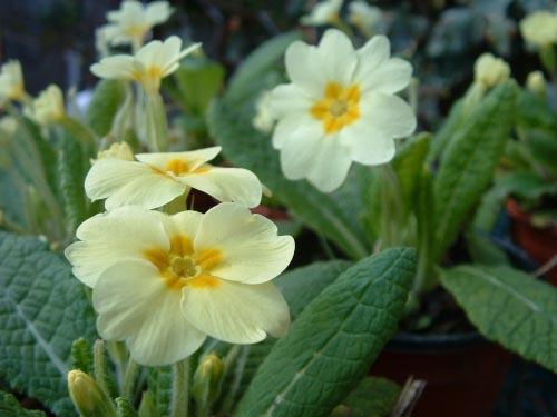 SpringGarden_20040414_01