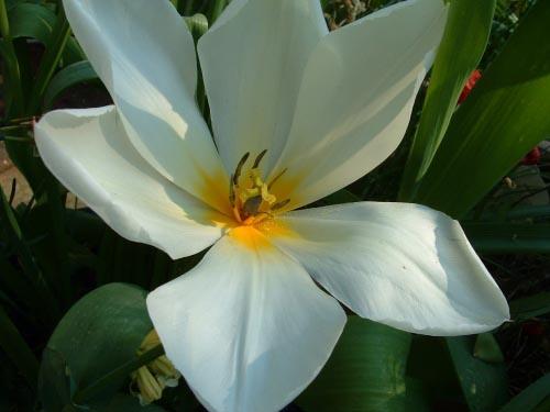 SpringGarden_20040414_02