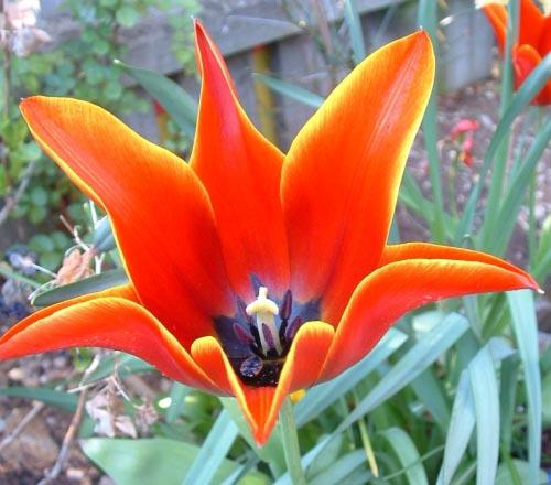 SpringGarden_20040414_05