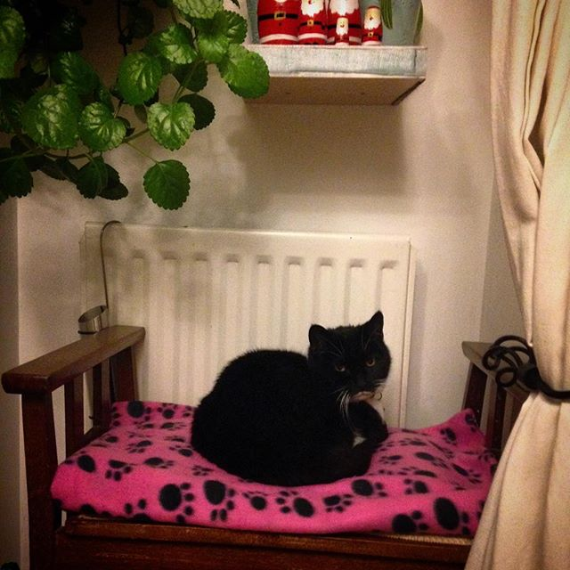 #1HappyYear Day 345: William has rather taken to tucking himself up on the piano stool, just like Tess did all those years ago... #100HappyDays