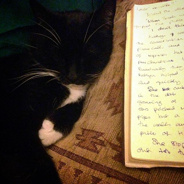 #amwriting companion... #william #cats #catsofinstagram #catsagram