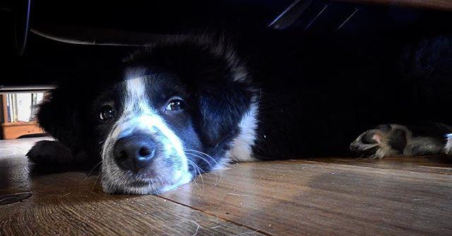 Quiet time under the sofa...