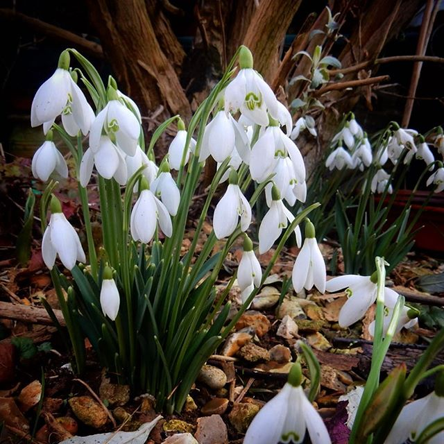 Signs that Winter may be releasing its grip on the garden…