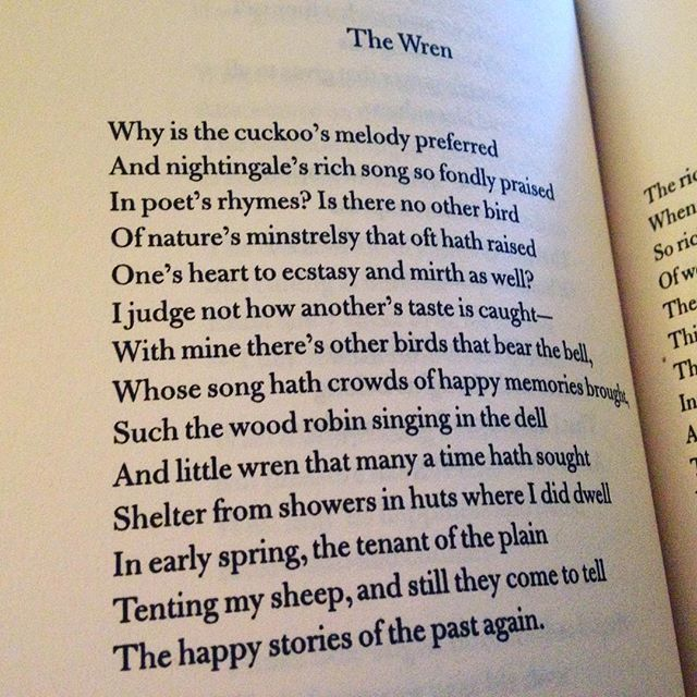"""""""And little wren that many a time hath sought""""  A #JohnClare #poem for #MrTumnal #TheWren"""