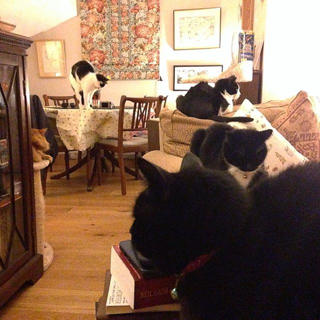 I think there might be a quiet #protest going on about the whereabouts of dinner tonight... #cats #catsofinstagram #catsagram #dinner #felineteatime