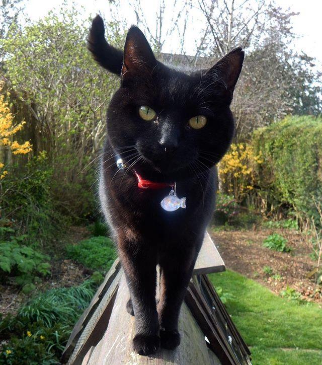 Hi... #Bella #cats #catsagram #catsofinstagram #Spring