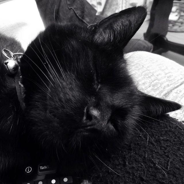 The relaxation of felines... #Arthur #cats #catsagram #catsofinstagram