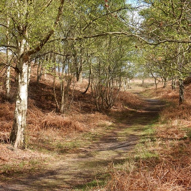 Through wood... #Spring #walk #woodland
