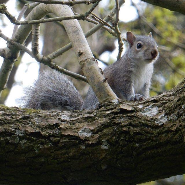 Baby squiggle fun!  #babyanimals #squirrels