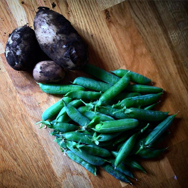 Potatoes ???? from @millakontkanen's allotment and peas from @vnemma are the accompaniment to tonight's fish supper... ????