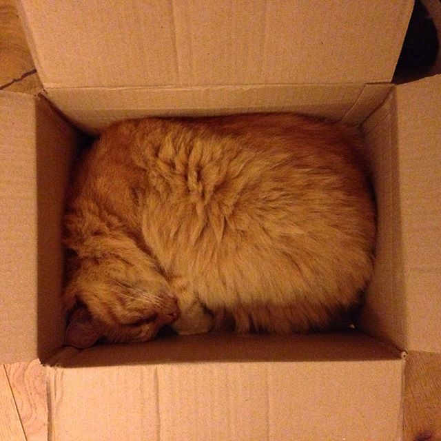 Who needs expensive cat beds? #catinabox #catsofinstagram #catsagram