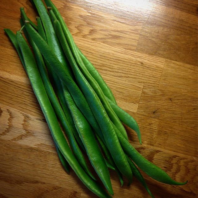 First bean harvest... #runnerbeans