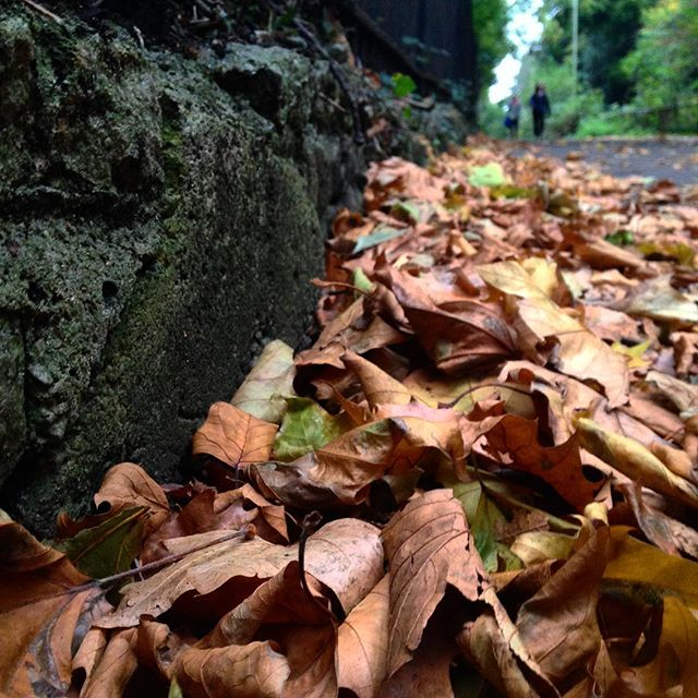 #Autumn???? is the magical time of year when, if you bend an ear and listen, you can hear the #fairies scamper through the leaves… #MrTumnal