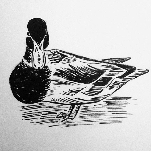 Day 14: Douglas á l'Orange #inktober #inktober2017 #duck???? #penandink #woodcut #amdrawing