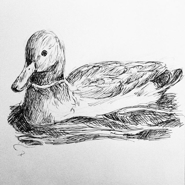 Day 30: #inktober #inktober2017 Douglas á l'Orange doing what ducks do…