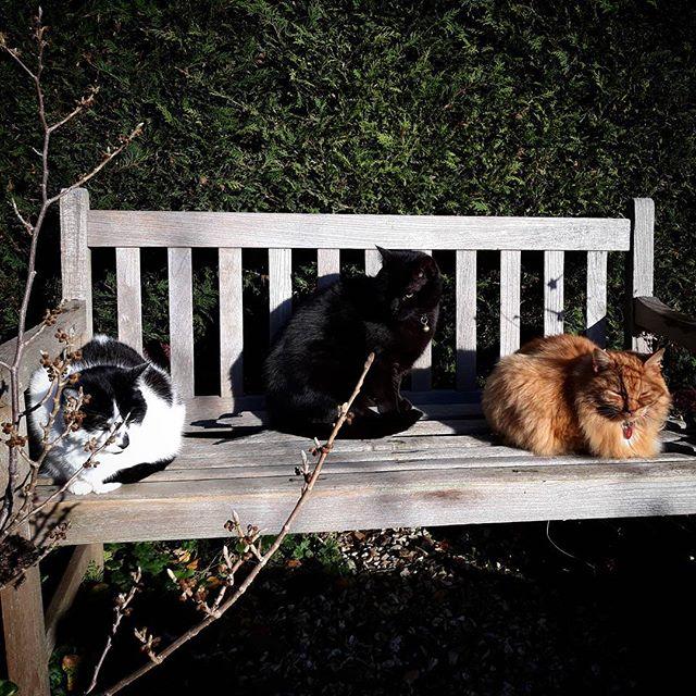 The boys! #sunny #wintermorning