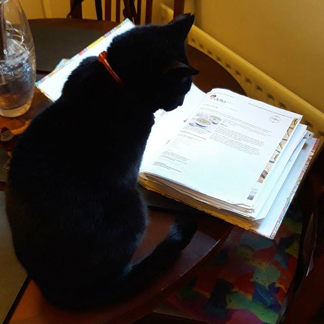 Just checking out #Delias turkey soup #recipe… #catsofinstagram #catsagram #cats #Bella