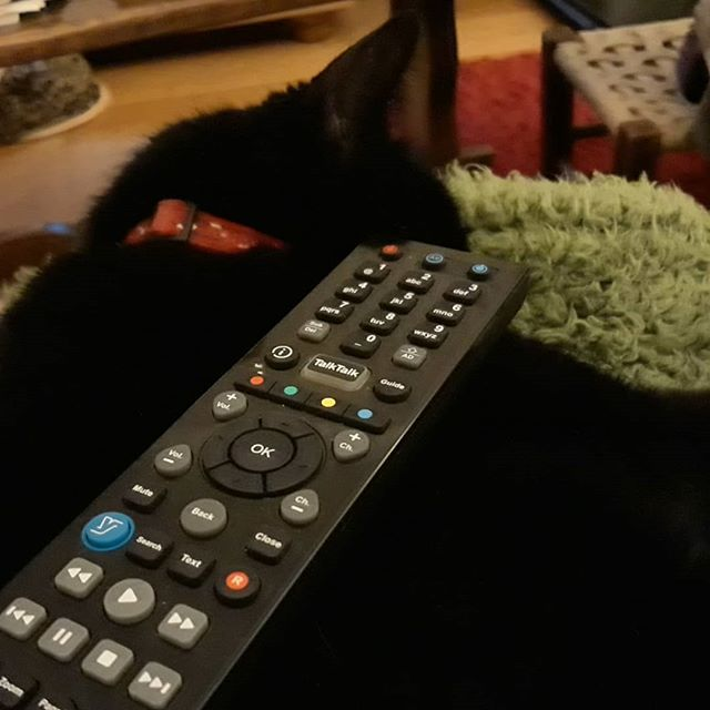We've got a new remote control holder! #catsofinstagram #catsagram