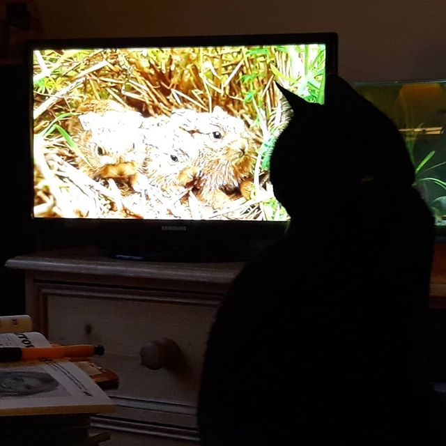 Annual @bbcspringwatch viewing for @bellafanella… #springwatch