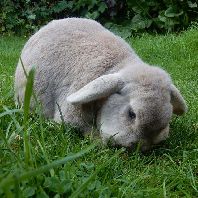 Bunnies doing what bunnies do… #bunnies????
