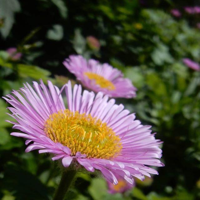 Springtime in the garden of flowers...