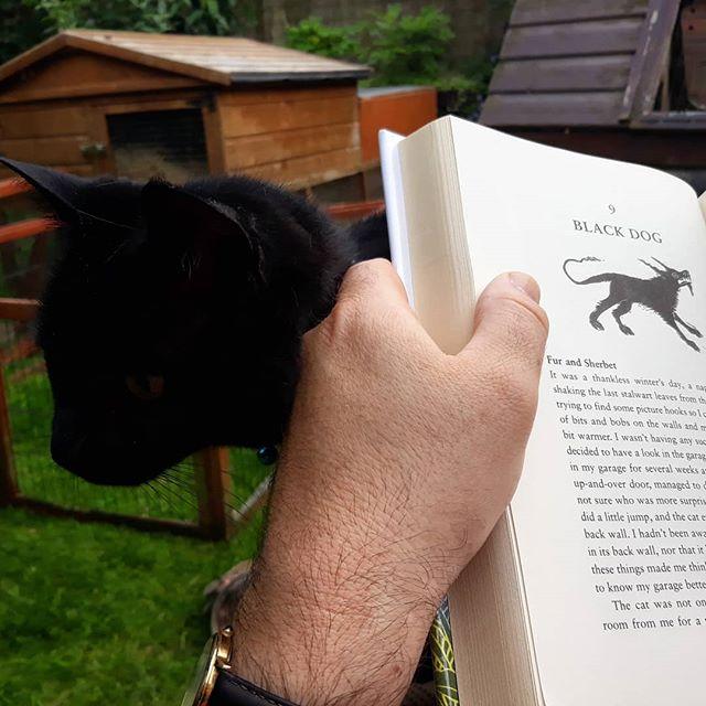 Book rest… #cats #catsofinstagram #TomCox @21stcenturyyokel
