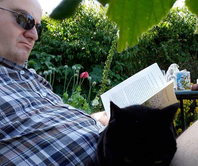 #SummerReading #amreading #NotQuiteLost @roz_morris #catsofinstagram #catsagram