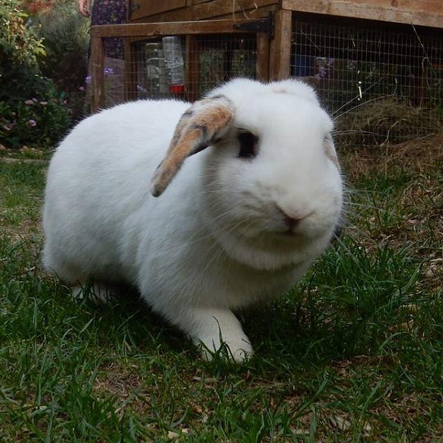 Bunnies doing what bunnies do… #bunnies???? #lovebunnies???? #BicesterZoo