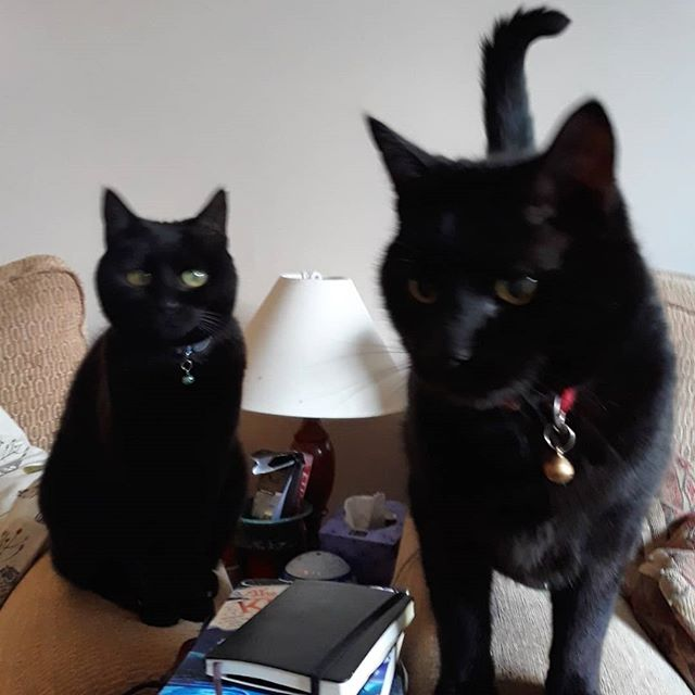 I will never understand why black cats are unpopular and struggle to be rehomed. My @bellafanella and @catnamedafteramouse are the best! #BlackCatDay