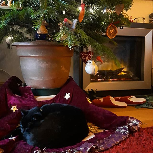 Taking it easy under the Christmas tree… @bellafanella #catsofinstagram #catsagram #cats