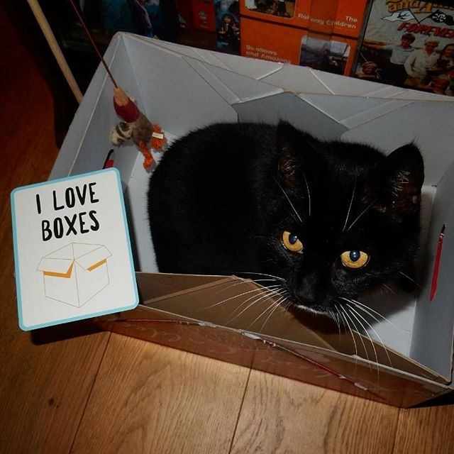 """I love boxes"" ~@williamo.jefferado #moggymoments #turkeyboxes🦃 #catsofinstagram #catsagram #cats #Christmas🎄"