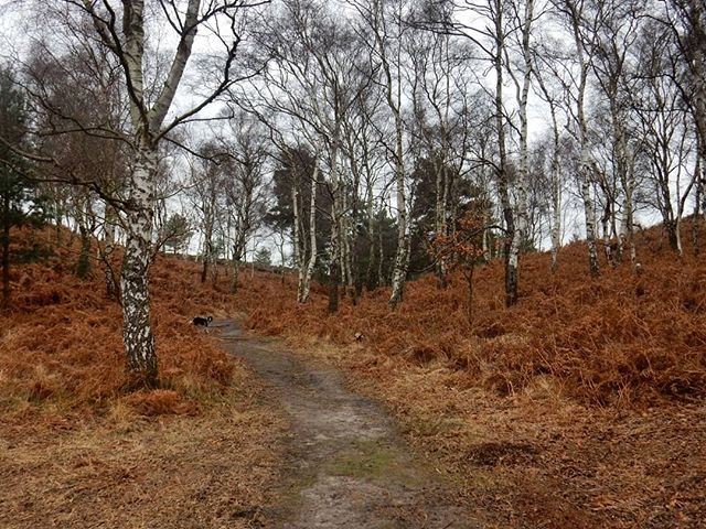 A walk in the woods to blow the cobwebs away...