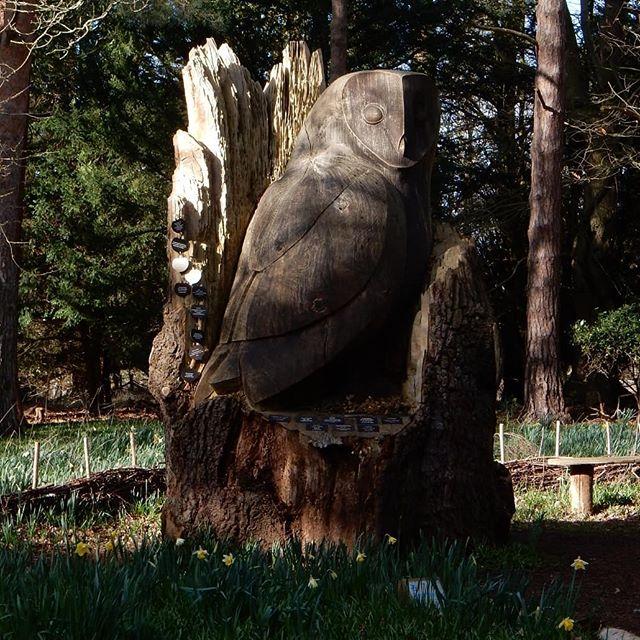 The Tree of Life… #treeoflife #peace #remberance #woodland @rspb_love_nature