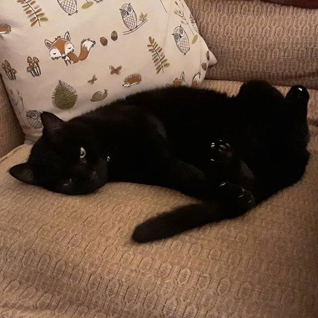 Just kickin' back and relaxin'… #catsofinstagram #catsagram #cats