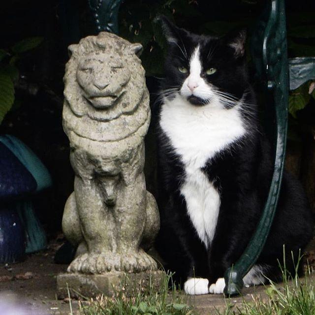 Seriously cat.  #catsofinstagram #catsagram #cats