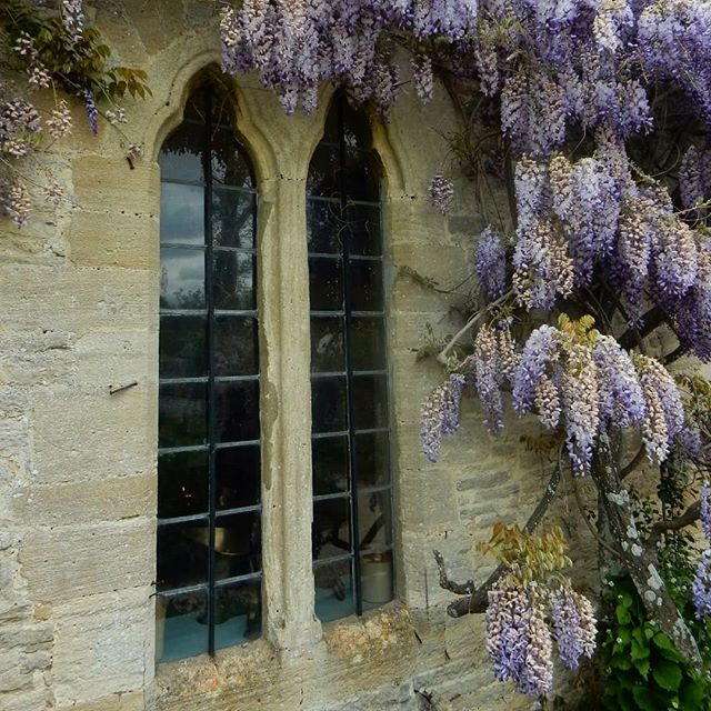 Shades of blue… #wisteria #cianothus @cogges