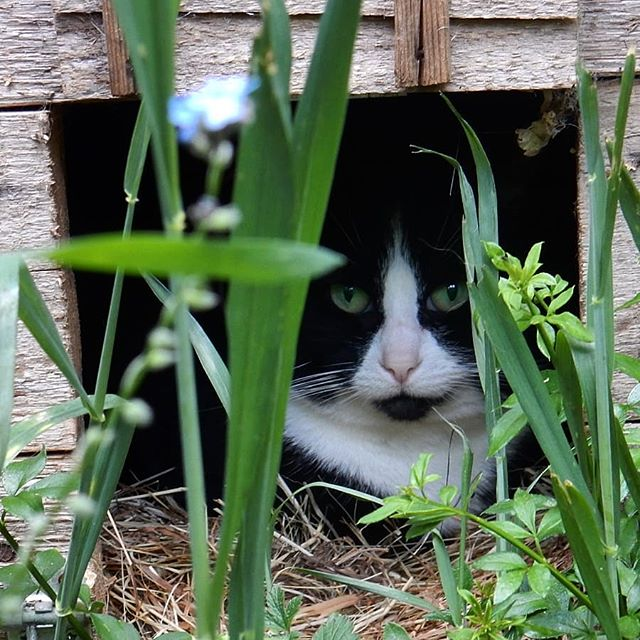 She's not in trouble but Chloe is still in the duck house… 😂 #cats #catsagram #catsofinstagram