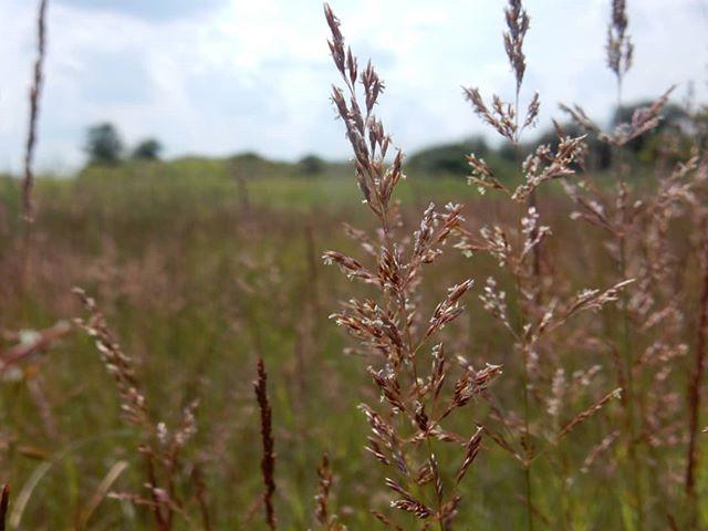 Grasses...