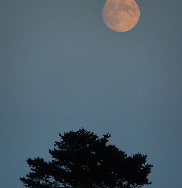 A summer's moon… #moon #sunset #burnhamoverystaithe #northnorfolk