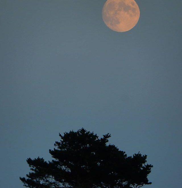 A summer's moon… #moon #sunset #burnhamoverystaithe #northnorfolk