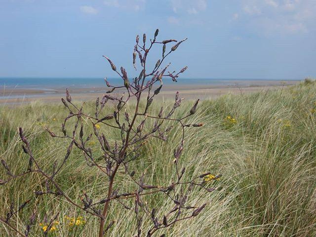 Oh I do like to be beside the seaside  Oh I do like to be beside the sea...