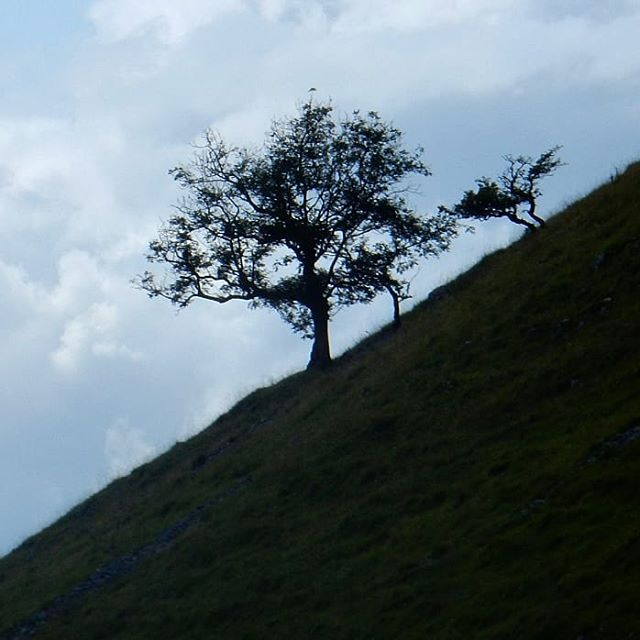 Lonely tree... #gordalescar #Yorkshire