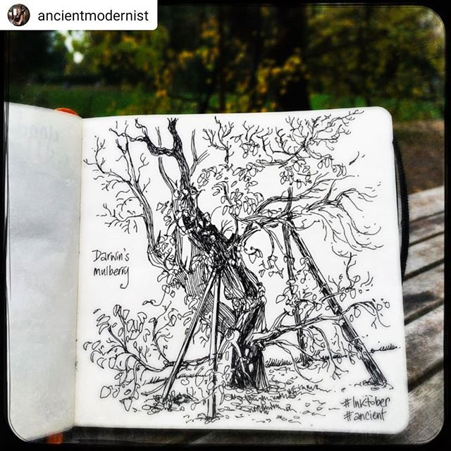 O that's how you draw trees! ••• #Repost @ancientmodernist • • • • • Darwin's mulberry tree, in the garden at Down House #Inktober #ancient