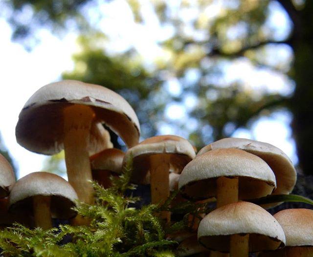Fairy houses or fungi…? @evenleywoodgarden #fungi #fairies #Autumn🍁