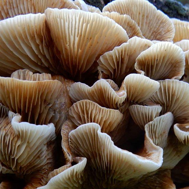 Autumn fruit… #fungi #fungiphotography #Autumn🍁 @evenleywoodgarden