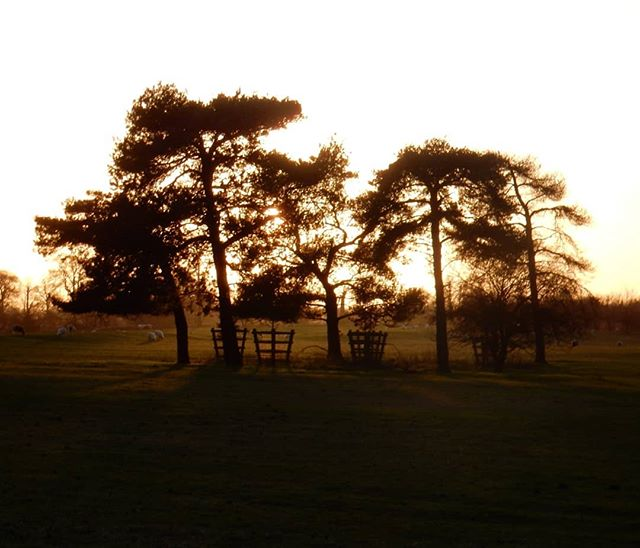 Copse at sunset... @nt_stowe #fridaythe13th #StoweLandscapeGardens